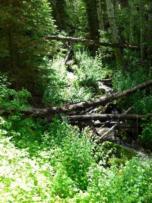 Bull Mountain Trail Dead-fall
