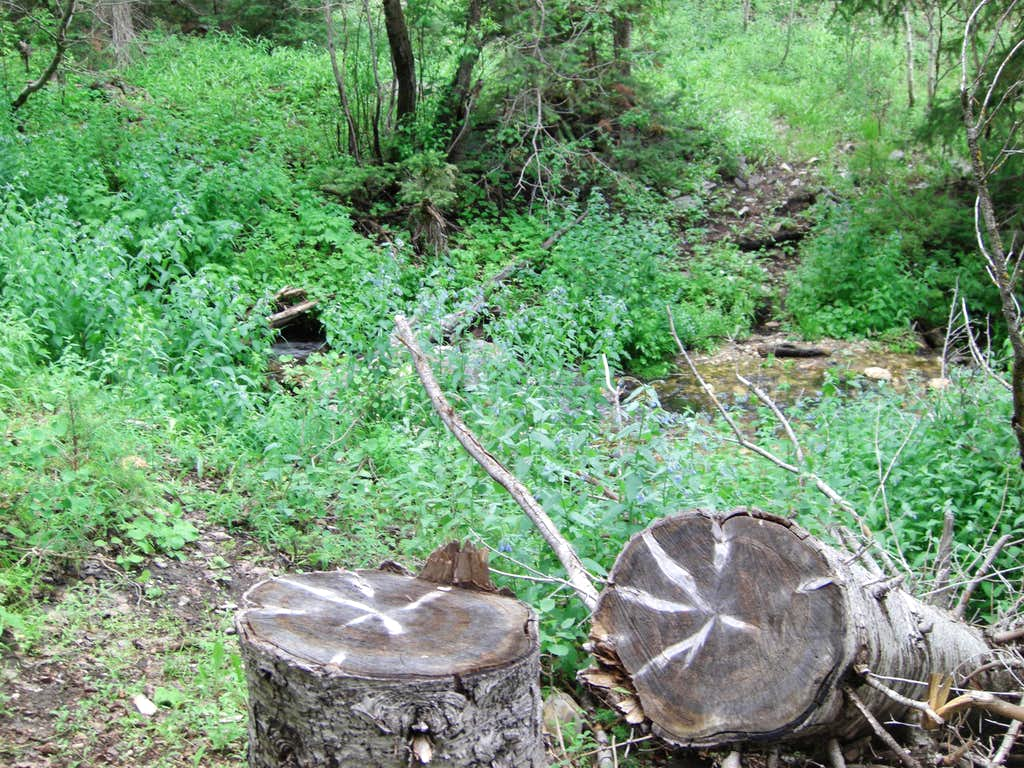 Bull Mountain Creek-crossing Stump