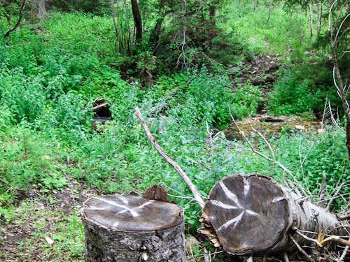 Bull Mountain Creek-crossing Stump