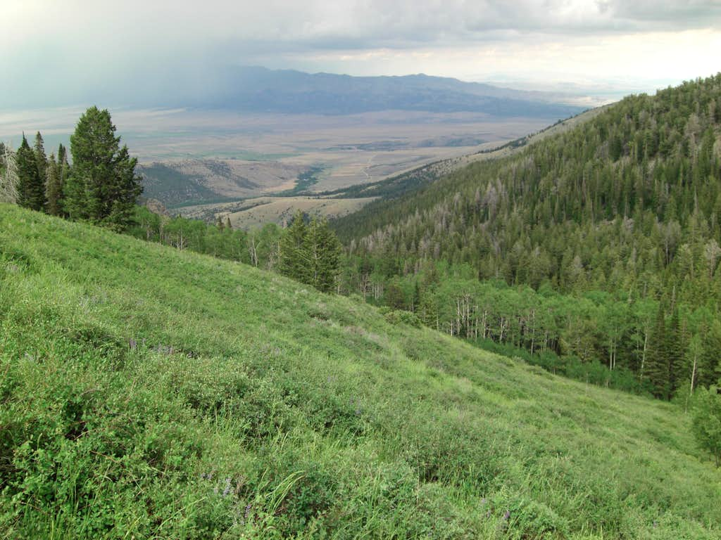 Bull Mountain High Meadow