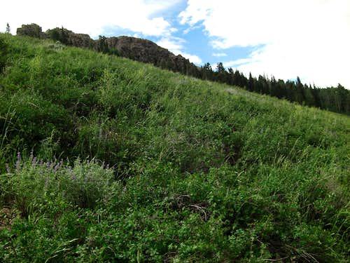 Bull Mountain Trail High Meadow