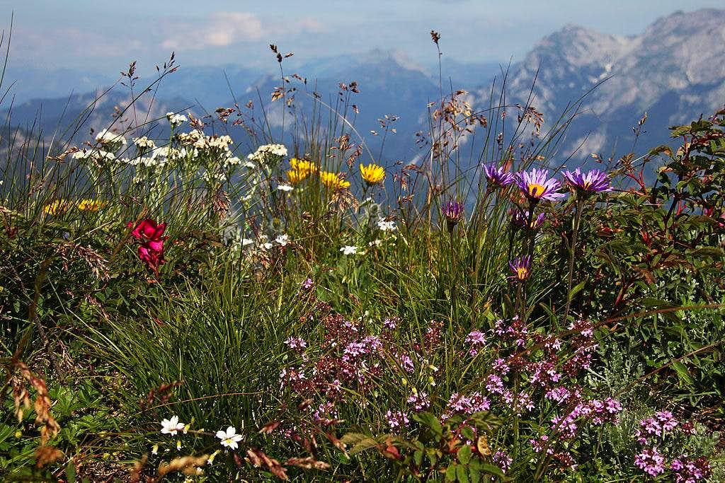 Flowers on the ridge