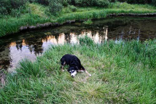 Duchess by Baldwin Creek