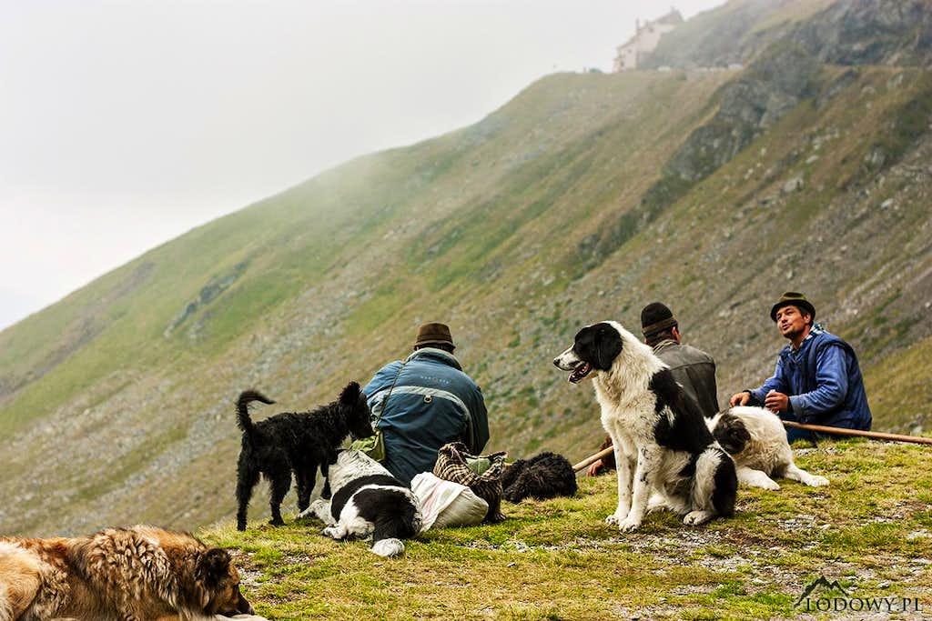 Fagaras shepherds