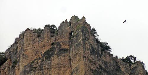 Vulture above Jonte walls
