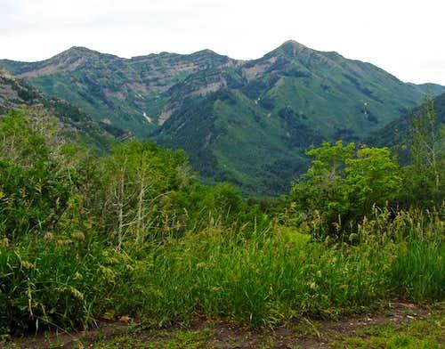 Provo Peak from Squaw Peak Rd.