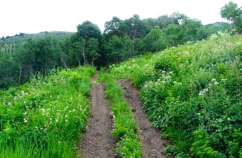 Provo Peak ATV trail