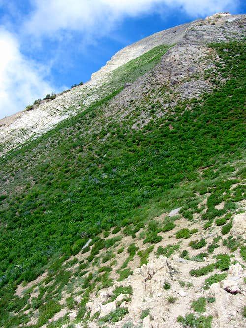Worst descent ever