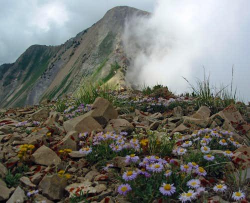 Provo Peak from East Provo Peak