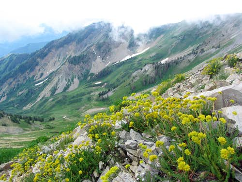Wildflowers in front of Corral Mountain