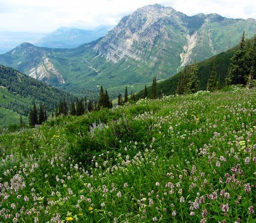 Provo Peak meadow
