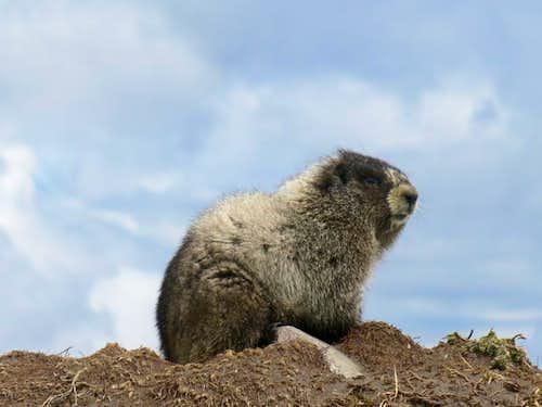 Railroad Grade Trail Marmot