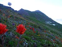 Indian Paintbrush on Indian Head