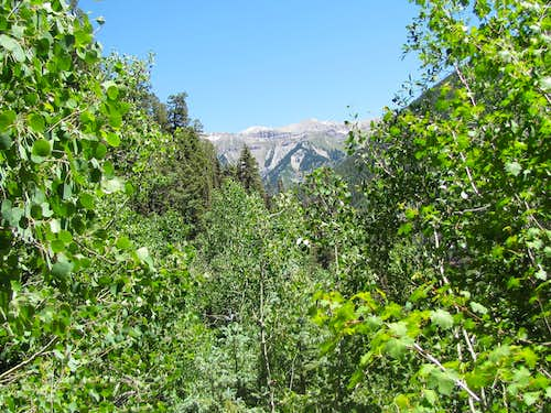 On Wasatch Trail
