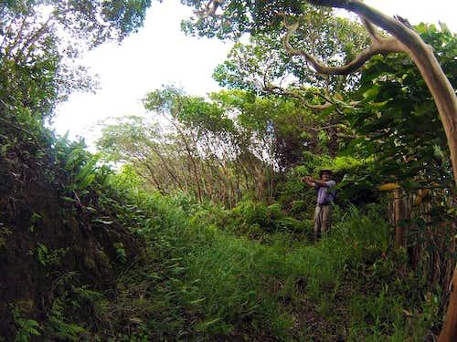 The Kaaumakua Ohulehule Saddle