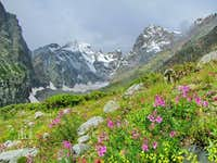 Pic Coolidge and Barre des Ecrins with flowers