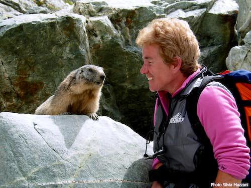 Trusting marmot near Glacier Blanc, Ecrins Park