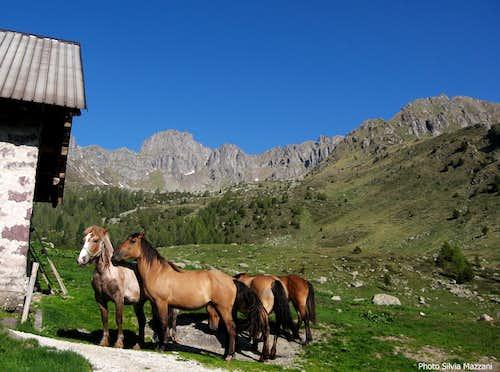 Horses at Malga Val Sorda II