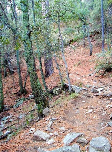 The Old Baldy Trail leading...