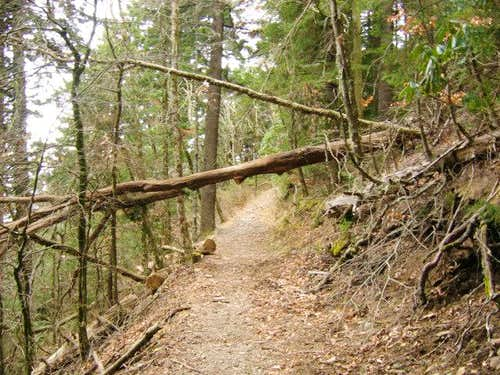 A downed tree across the...