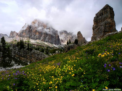 August blooming at Cinque Torri