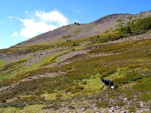 Meadow Dog