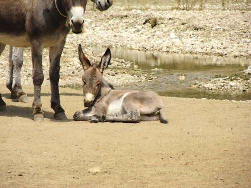nice donkey