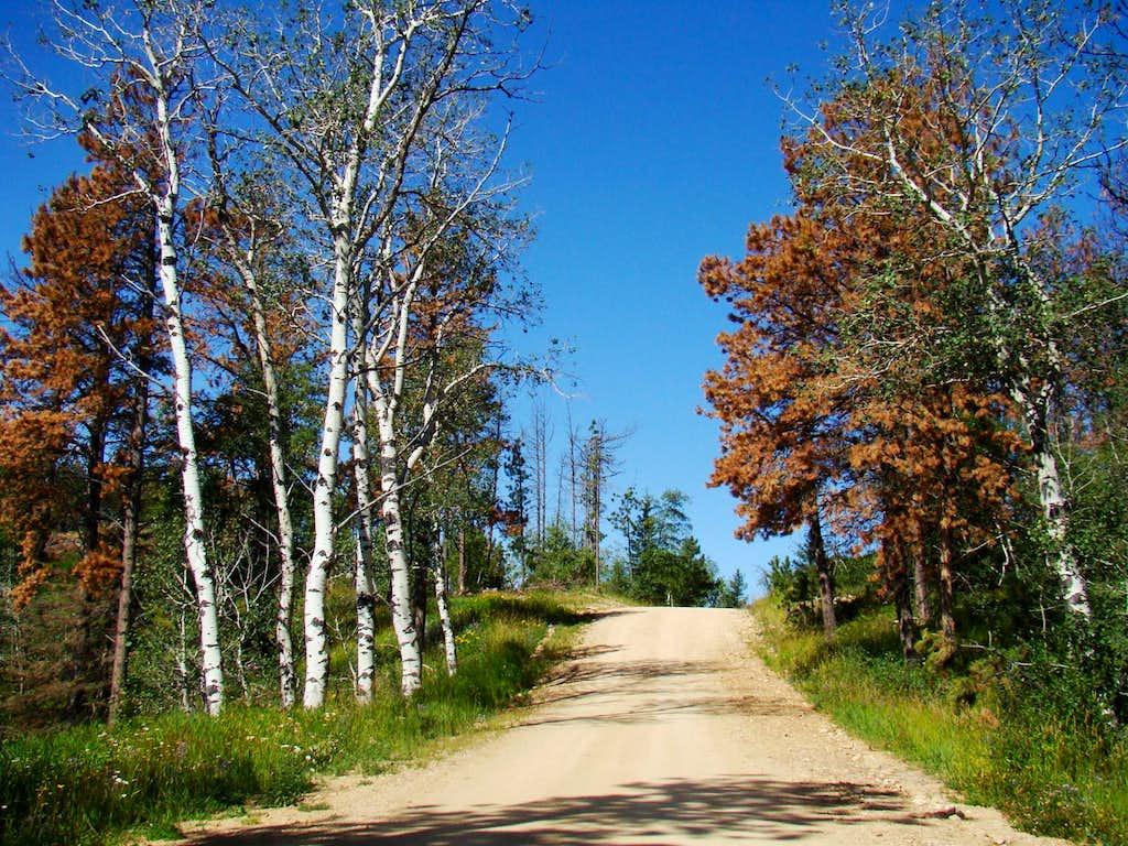 Terry Peak Summit Road