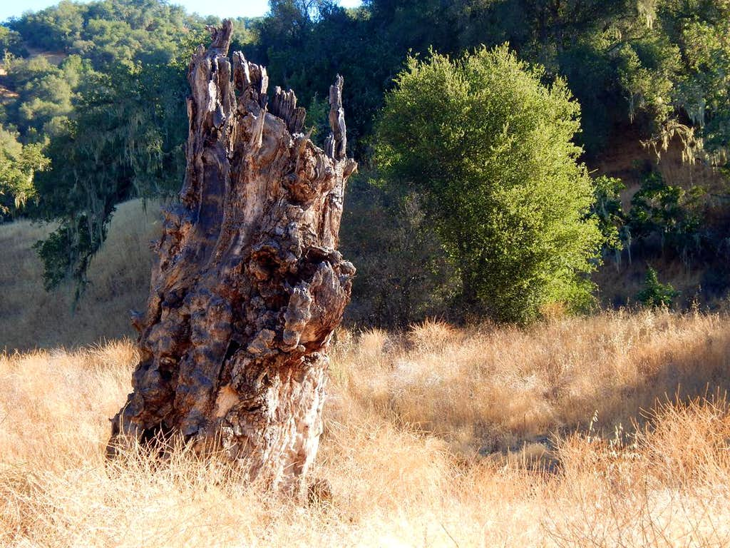 Old Stump in Hunting Hollow Canyon