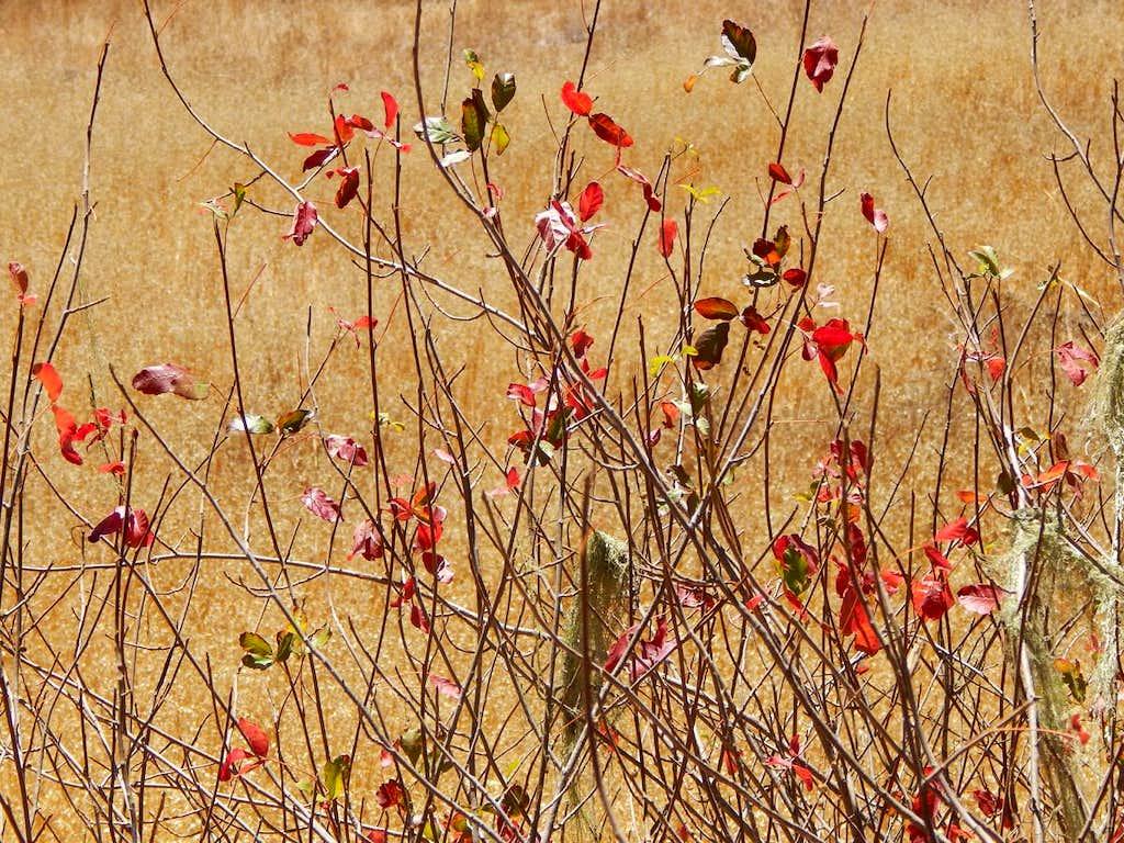 Poison Oak Along the Bills Hill Trail