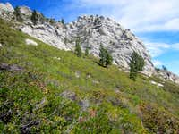 Heavy Brush on the Flanks of the SW Peak