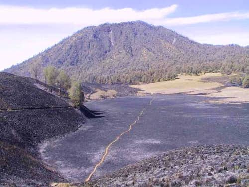 Results of the tussock fire...