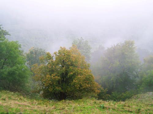 The hillside of Vysoka in fog