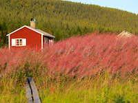 Fireweed at Aktse