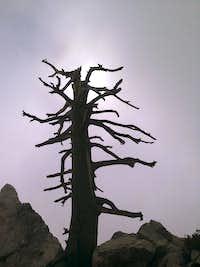 The Summit Tree