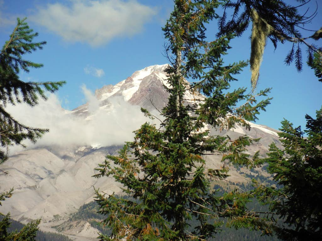 Mount Hood through the trees
