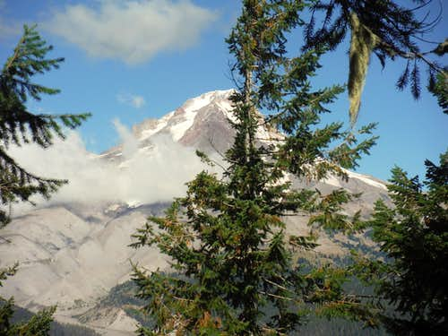 Mount Hood through the trees