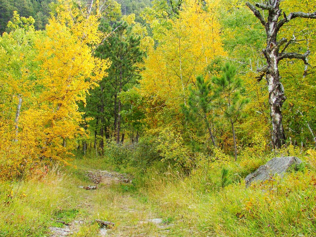 Fall Colors on Trail 89