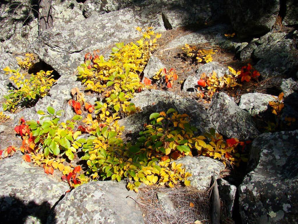 Centennial Trail Fall Colors
