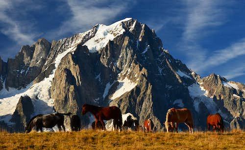 Horses on mont de la saxe