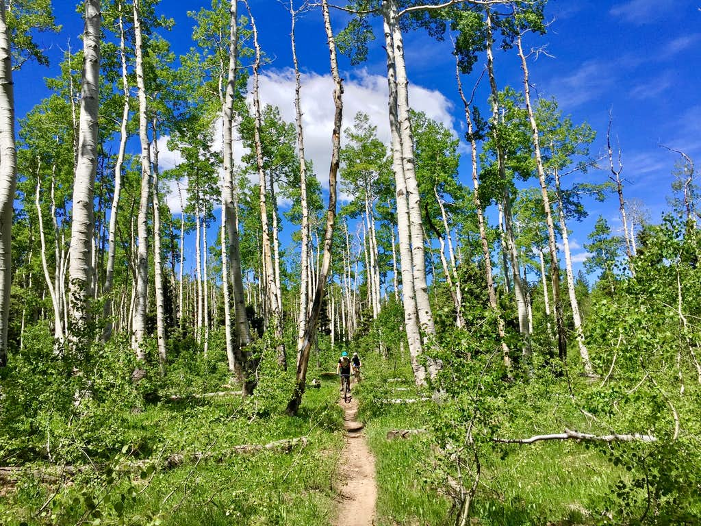 Biking on Uncompahgre Plateau