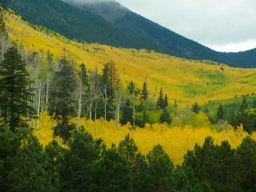 Annual Arizona Autumn Aspen Apocalypse