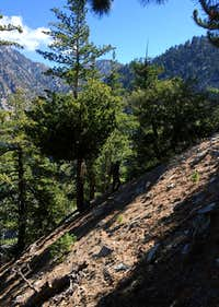 Steep hike above the chute on Sugarloaf