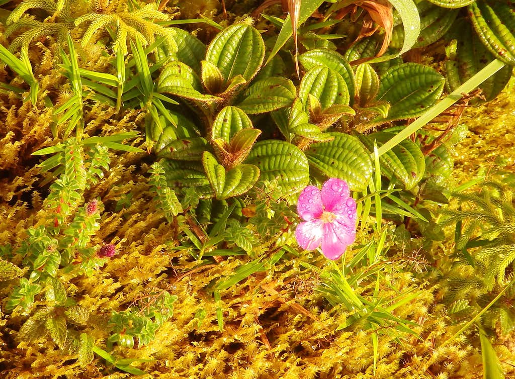Airelon Trail Flora