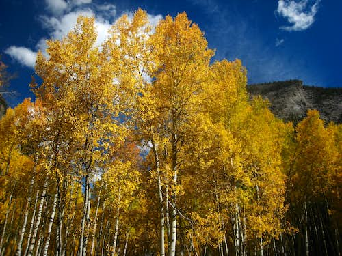 Aspens in the town of Crystal