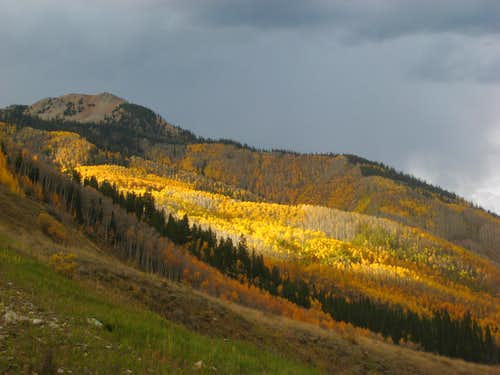 Aspens near the Cathedral Peak TH