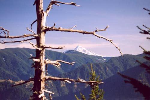 Mt. Hood as seen from near...