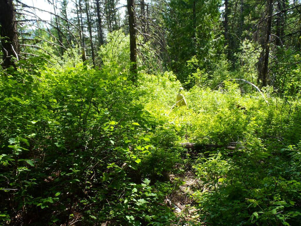 Kalispell Rock Trail