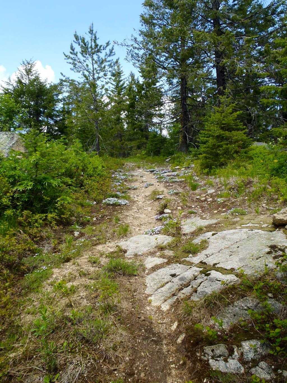 Kalispell Rock - Trail #103
