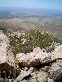 Cookes Peak summit (July 2004)